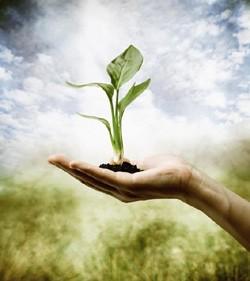 green-plant